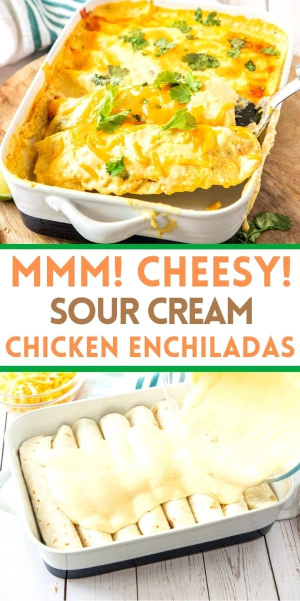 Sour cream chicken enchiladas are so delicious you will find this recipe on your meal plan every week. Easy and creamy chicken enchiladas!
