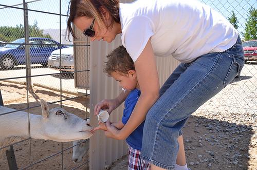 Judah Feeding Goat