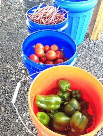 MADCAAP Helping Hands garden produce